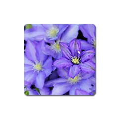 Purple Wildflowers For Fms Magnet (square) by FunWithFibro