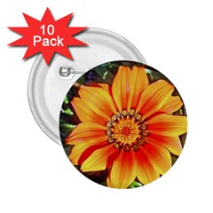 Flower In A Parking Lot 2 25  Button (10 Pack) by sirhowardlee
