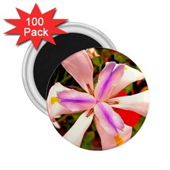 African Iris 2 25  Button Magnet (100 Pack) by sirhowardlee