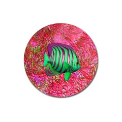 Fish Magnet 3  (round) by icarusismartdesigns