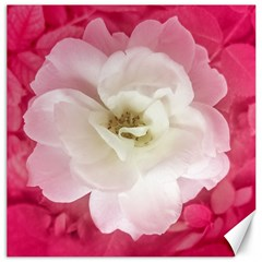 White Rose With Pink Leaves Around  Canvas 20  X 20  (unframed) by dflcprints