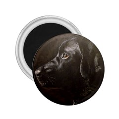 Black Lab 2 25  Button Magnet by LabsandRetrievers