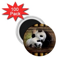 Panda Love 1 75  Button Magnet (100 Pack)