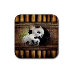 Panda Love Drink Coasters 4 Pack (square) by TheWowFactor
