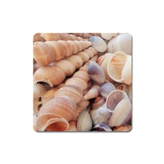 Seashells 3000 4000 Magnet (square) by yoursparklingshop