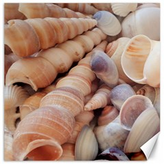 Sea Shells Canvas 12  X 12  (unframed) by yoursparklingshop