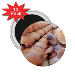 Sea Shells 2 25  Button Magnet (10 Pack) by yoursparklingshop