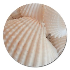 Sunny White Seashells Magnet 5  (round) by yoursparklingshop