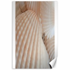 Sunny White Seashells Canvas 24  X 36  (unframed)