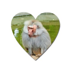 Grey Monkey Macaque Magnet (heart) by yoursparklingshop