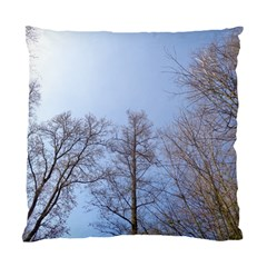 Large Trees In Sky Cushion Case (single Sided)  by yoursparklingshop