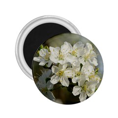 Spring Flowers 2 25  Button Magnet