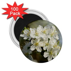 Spring Flowers 2 25  Button Magnet (100 Pack) by anstey