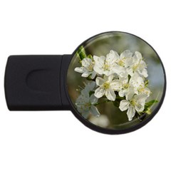 Spring Flowers 4gb Usb Flash Drive (round) by anstey