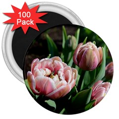 Tulips 3  Button Magnet (100 Pack) by anstey