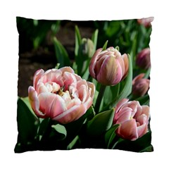 Tulips Cushion Case (two Sided)  by anstey