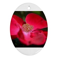 Bright Red Rose Ornament (oval)