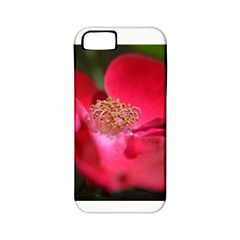 Bright Red Rose Apple Iphone 5 Classic Hardshell Case (pc+silicone) by timelessartoncanvas