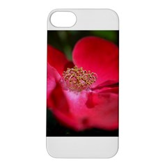 Bright Red Rose Apple Iphone 5s Hardshell Case by timelessartoncanvas