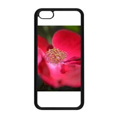 Bright Red Rose Apple Iphone 5c Seamless Case (black) by timelessartoncanvas