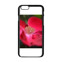 Bright Red Rose Apple Iphone 6 Black Enamel Case