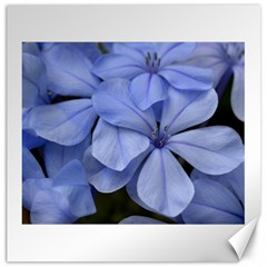 Bright Blue Flowers Canvas 20  X 20   by timelessartoncanvas
