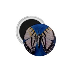 Butterfly 1 75  Magnets by timelessartoncanvas