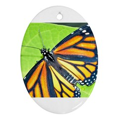 Butterfly 2 Ornament (oval)