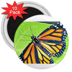 Butterfly 2 3  Magnets (10 Pack)  by timelessartoncanvas