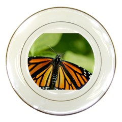 Butterfly 3 Porcelain Plates by timelessartoncanvas