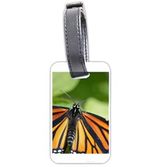 Butterfly 3 Luggage Tags (one Side)  by timelessartoncanvas