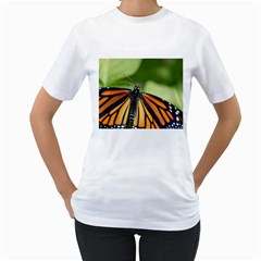 Butterfly 3 Women s T Shirt (white)  by timelessartoncanvas
