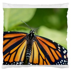 Butterfly 3 Large Flano Cushion Cases (one Side)  by timelessartoncanvas