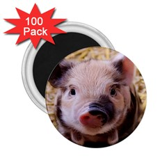 Sweet Piglet 2 25  Magnets (100 Pack)