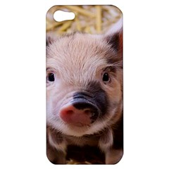 Sweet Piglet Apple Iphone 5 Hardshell Case by ImpressiveMoments