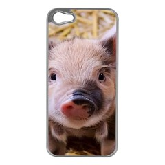 Sweet Piglet Apple Iphone 5 Case (silver)