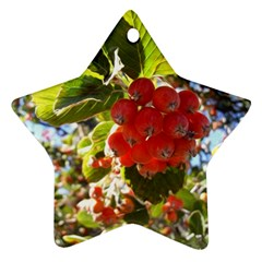 Rowan Star Ornament (two Sides)  by infloence