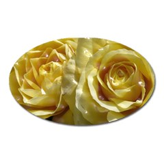 Yellow Roses Oval Magnet