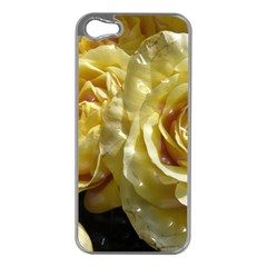 Yellow Roses Apple Iphone 5 Case (silver) by MoreColorsinLife