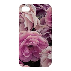 Great Garden Roses Pink Apple Iphone 4/4s Hardshell Case