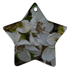 Amazing Garden Flowers 32 Star Ornament (two Sides)