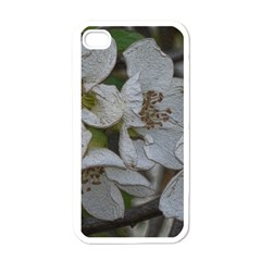 Amazing Garden Flowers 32 Apple Iphone 4 Case (white) by MoreColorsinLife