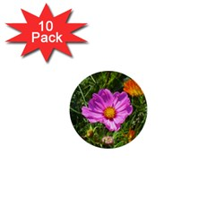 Amazing Garden Flowers 24 1  Mini Buttons (10 Pack)