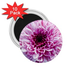 Wonderful Flowers 2 25  Magnets (10 Pack)