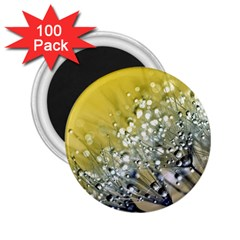 Dandelion 2015 0713 2 25  Magnets (100 Pack)  by JAMFoto