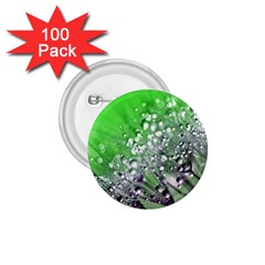 Dandelion 2015 0716 1 75  Buttons (100 Pack)