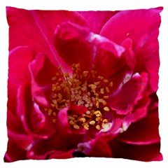 Red Rose Large Cushion Cases (two Sides)  by timelessartoncanvas