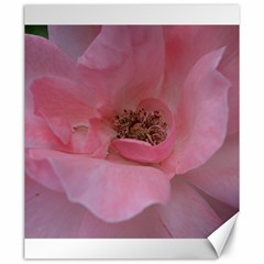 Pink Rose Canvas 20  X 24