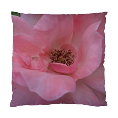 Pink Rose Standard Cushion Cases (Two Sides)