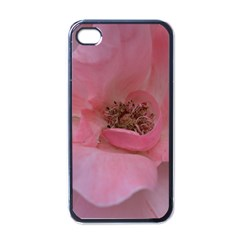 Pink Rose Apple Iphone 4 Case (black) by timelessartoncanvas